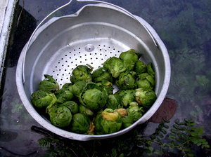 Brussels 2: Fresh brussel sprouts.