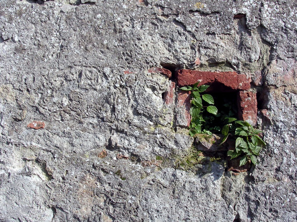 Hole in the Wall 2: Plants growing from a hole in a wall.