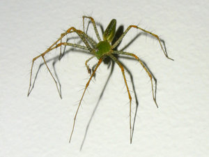 arachnophobia 6: a big spindly legged green alien-looking spider who has *gulp* since disappeared...