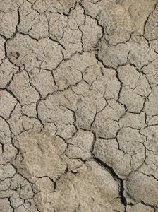 cracked earth: a bit of dried and cracked mud.