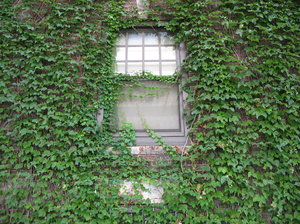 ivy window: a window surrounded by ivy.
