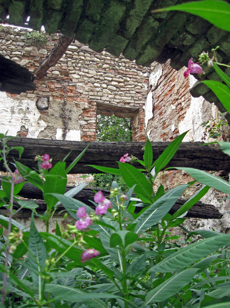 ruins with plants: ruins of an old building in the country, near river Olona, Northern italy