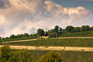 Wine ranks: Wine ranks in Germany