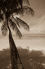Palm Tree: Palm tree with view of the Indian Ociean