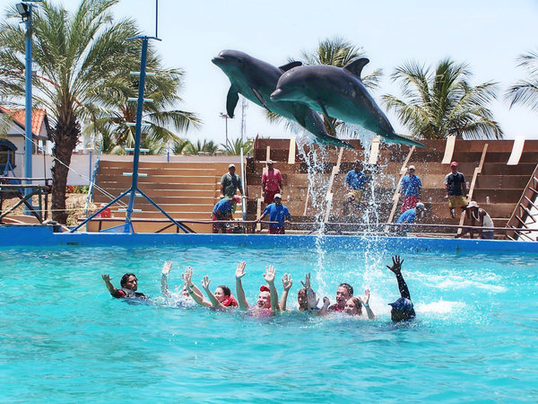 Dolphins: Swimming with the dolphins