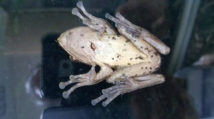 A frog greeting: A frog greeting on window.
