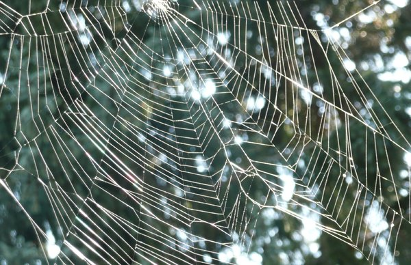 Spider Web: Spider web in autumn