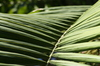 Palm Leaf Patterns: Just some shots of palm leaves