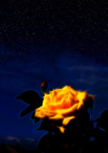 Midnight Rose: Glowing rose at night