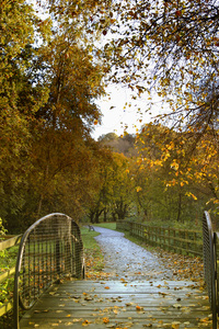 Autumn Walk: Autumn Walk