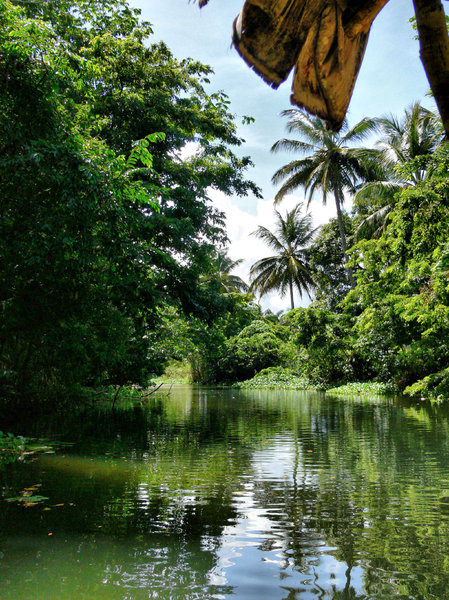 Tropical River: Lazy day on the river in the Dominican Republic