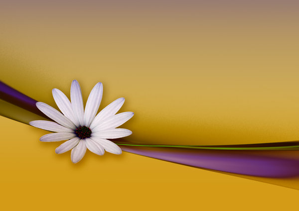 Flower and Ribbon abstract: Flower and Ribbon abstract. The usual wallpaper stuff
