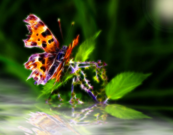 Midnight Butterfly: Fantasy butterfly over misty water