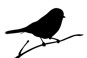 silhouette finch: Adobe Illustrator CS5