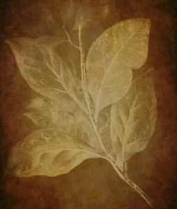Playing with light: Botanical drawing was used to create this texture