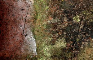 mossy brick 2: different view of a mossy brick