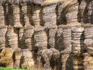 Straw Bales: Straw bales waiting in the sun