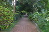 Green path: A splendid tropical nature in a privat garden.