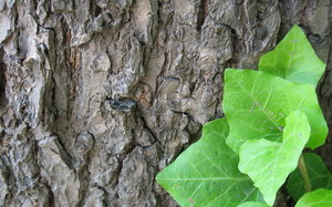 Bark and Leaves: Bark and some leaves