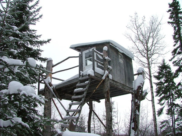 House on top of trees...: Camp for hunting in autumn found in winter...