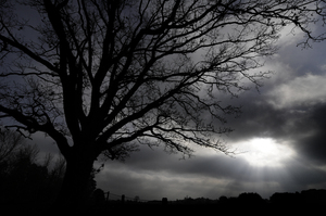 tree: dark landscape with tree in the winter