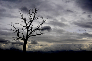 Dead tree: Spooky dead tree in winter landscape.