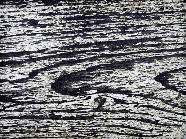 grunge: holidays 2008: grungy old wood I found at the Dutch shore.
