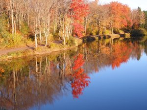 Fall on the lake: Tree reflection at Centennial park in Moncton  NB