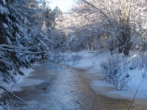 winter wonder land: a snowy picture on the Dobson trail in Riverview