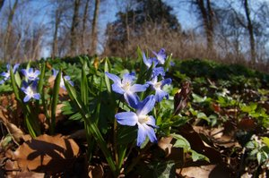 Springtime with a perspective: Spring flowers using a fisheye lens.