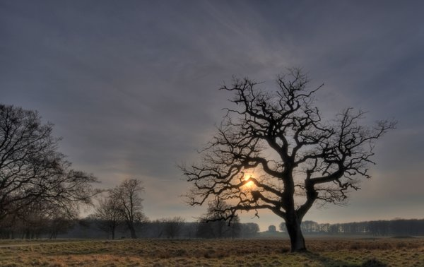 Tree in sunset - HDR: The picture is HDR using 11 images. The castle is Eremitage Castle, North of Copenhagen, Denmark