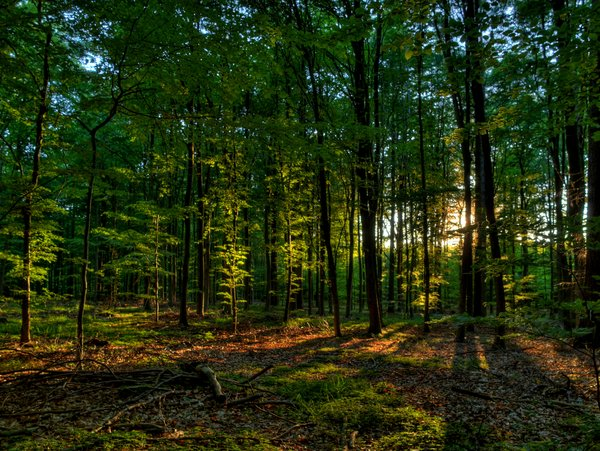 Summer forest - HDR: