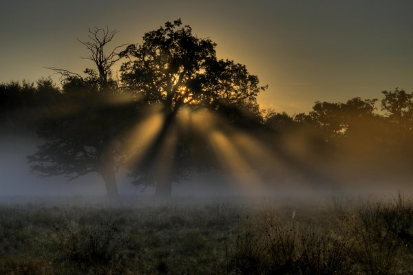 Morning - HDR: Misty morning in the wild life park. The picture is HDR using five images