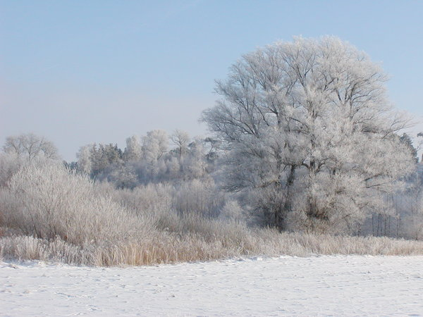 White Winter 2: Scenery from the countryside