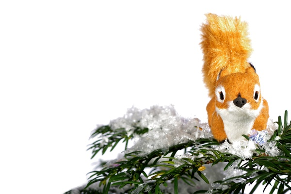 Plush squirrel on pine: Plush squirrel on pine branch with snow. Model. Isolated with whitre background.