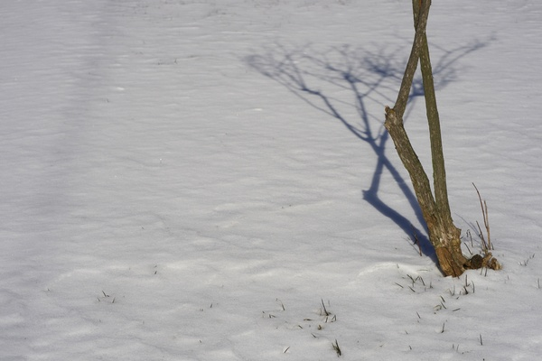 Small tree in snow: Small tree in snow