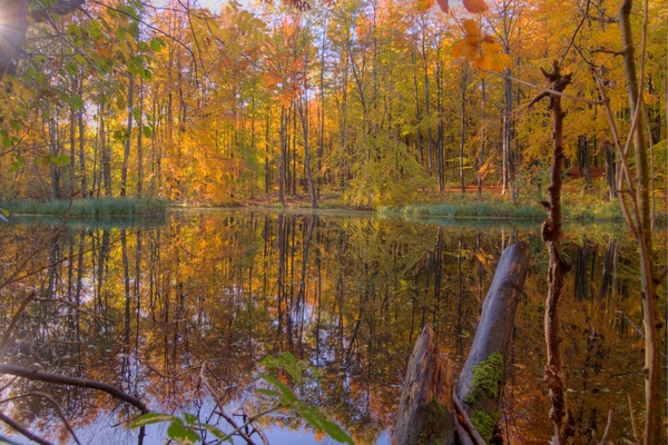 Autumn forest lake: Autumn forest lake with beautiful colors.