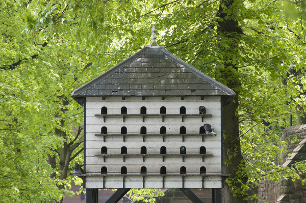 Large birdhouse: A wooden bird condo or large bird house in a public park