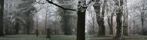 winter: icy day in a park