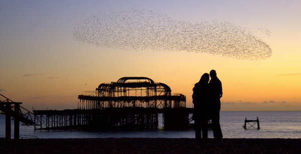 Starlings in Brighton: Romantic couple watching starling formation over Brighton's West Pier,sunset