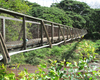 Waimea Swinging Bridge 2: On the outskirts of the town of Waimea (on the Hawaiian island of Kauai), a swinging bridge crosses the Waimea River. A