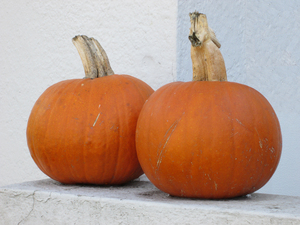 Two Pumpkins: Two pumpkins on a neighbor's porch in the autumn, just after Halloween.