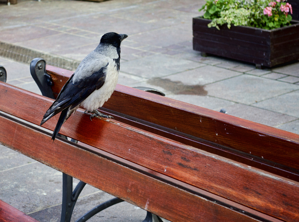 bird on a bench: bird on a bench