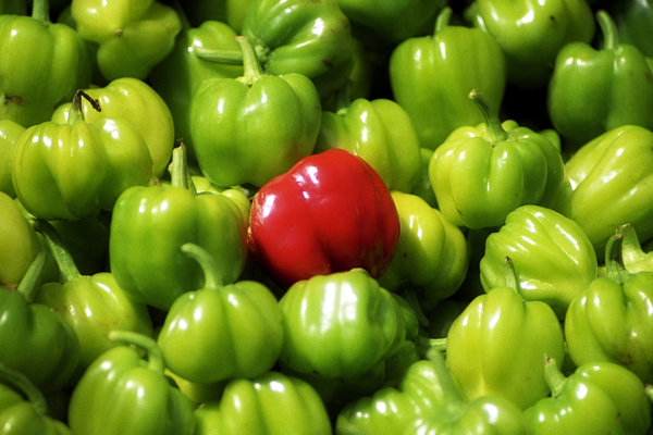 pepper: greek summer food