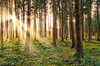 Fairytale Forest - Sunburst: Sunburst in natural Forest - Fairytale Mood