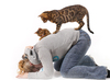 Woman playing with Bengal Cats: Young Woman playing with her Bengal Cats, funny.