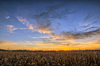 Ripe Cornfield at Sunset: Agricultural Landsape at Sunset - ripe Corn Field