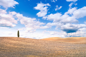 Rolling Hills with single Cypr: Rolling Hills with single Cypress Tree - Tuscany, Italy