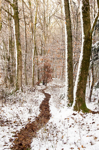 Footpath in snowy Forest: Small Trail in snowy Forest