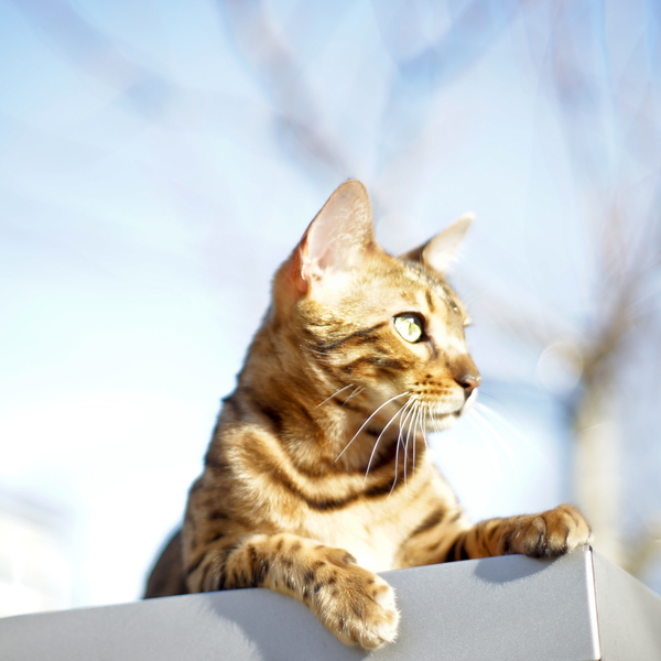 Cat lying in Sun on Roof: Cat enjoying the Sunshine lying on a Roof